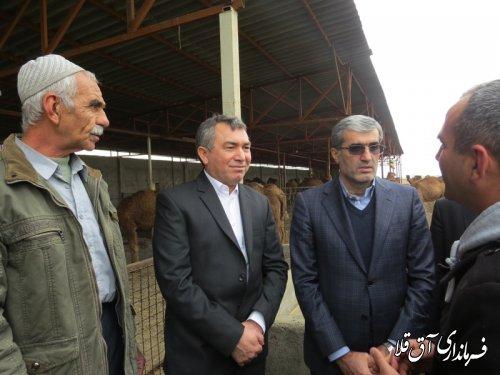 واحد پرورش 40 نفری شتر در روستای قانقرمه با سرمایه گذاری 6 میلیارد ریال به بهره برداری رسید