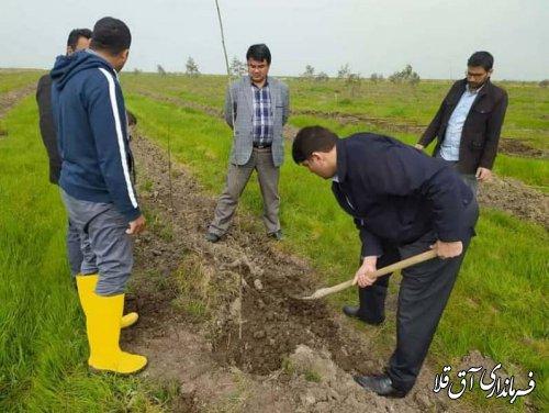 آئین درختکاری در بوستان 4 هزار شهید شهرستان آق قلا برگزار شد